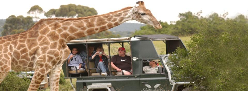 schotia safari