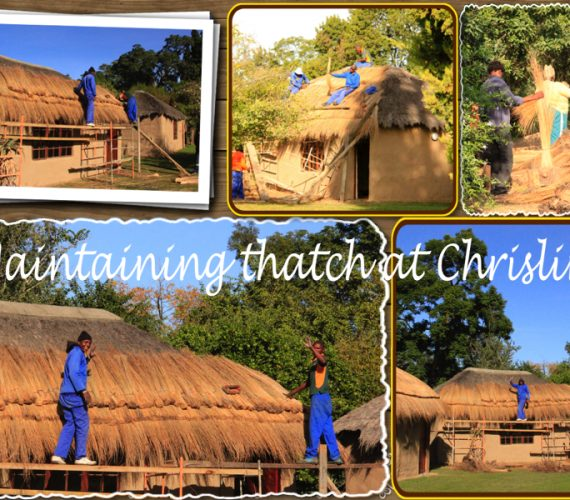 Maintaining a thatch roof