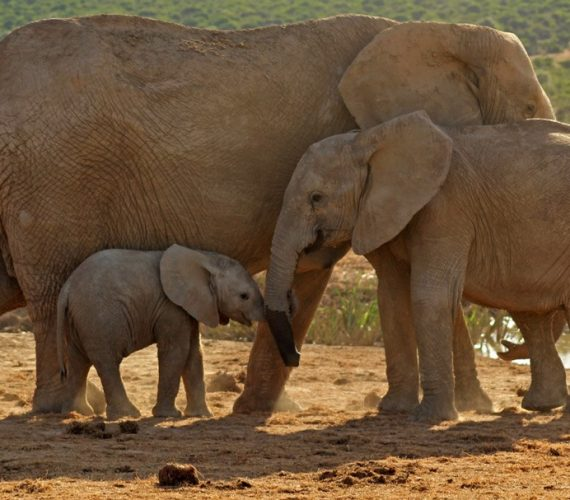 Top Attractions: Addo Elephant Park
