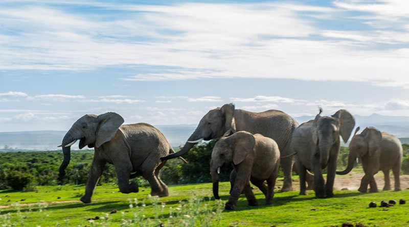 Conservation Success at Addo Elephant Park