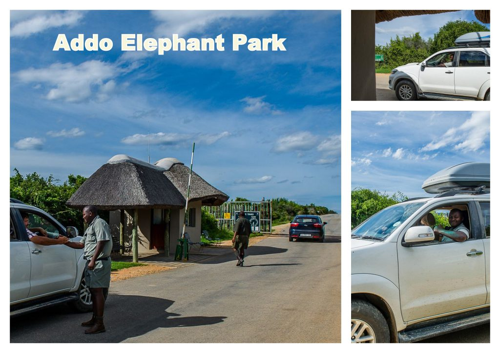 Addo Elephant Park on a budget with Chrislin African Lodge