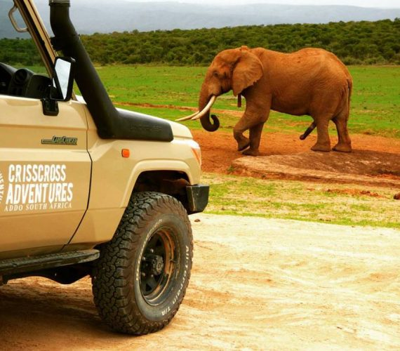 Official Guide for Addo Big 5 Safari