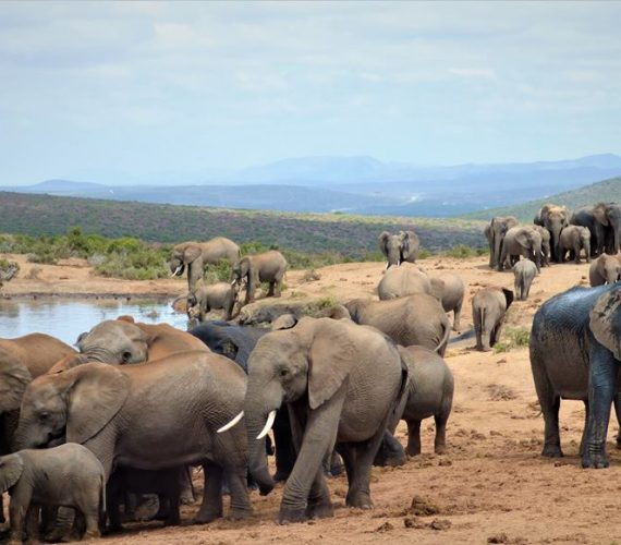 VIDEO: Why Addo is the Perfect Holiday Destination