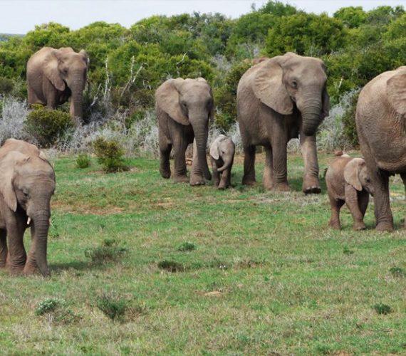 Tour Addo Elephant Park