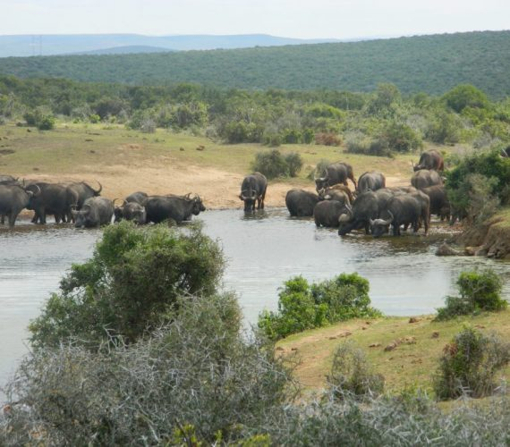 5 of 7 biomes found in the Addo Elephant National Park