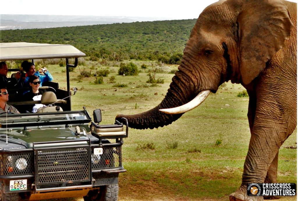 Addo Elephant Park Game Drive