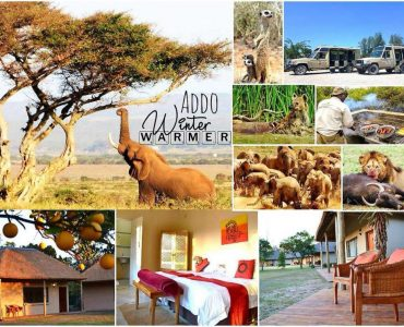 7 Facts About Addo's Big 7