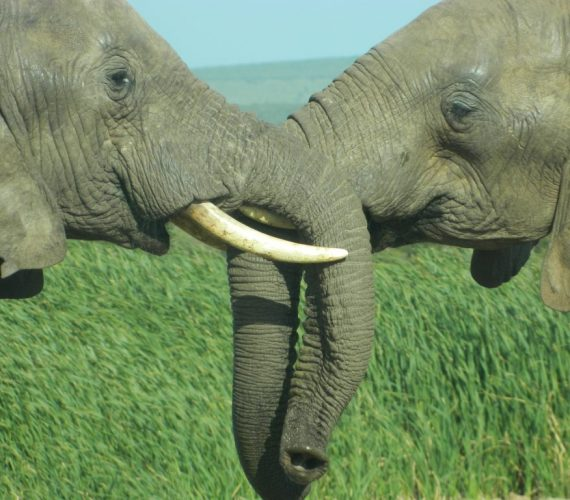 Addo Elephant National Park Top Animals