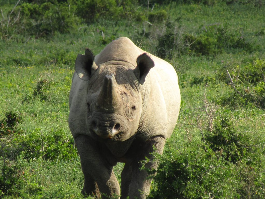 Black Rhino Addo Big 7